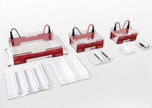 Elektrofores och blotting